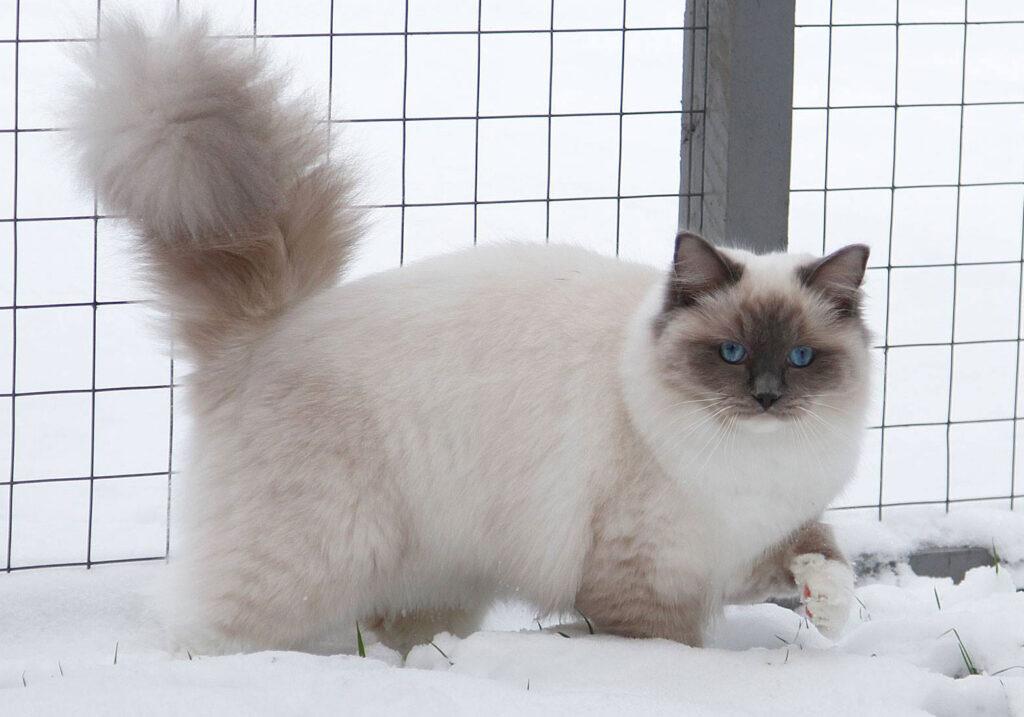Koc-Pol Cat Melissandre