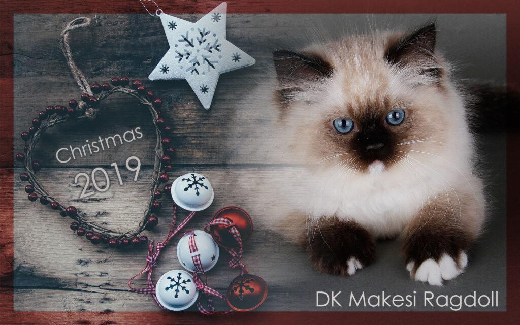 Makesi Ragdoll julen 2019
